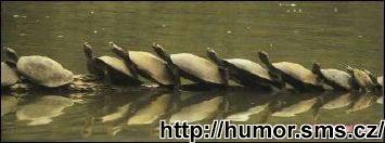 http://humor.sms.cz/kategorie/humor/obrazky/obrazky/154%20kopie.jpg