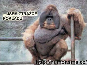 http://humor.sms.cz/kategorie/humor/obrazky/obrazky/55%20kopie.jpg