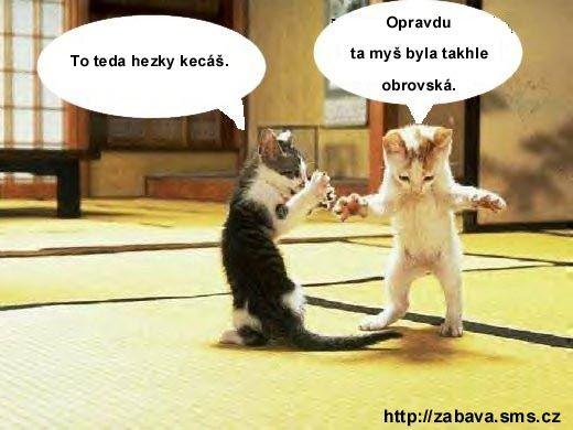 http://humor.sms.cz/kategorie/humor/obrazky/obrazky/Kittykatsa.jpg