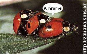 http://humor.sms.cz/kategorie/humor/obrazky/obrazky/eh150.jpg
