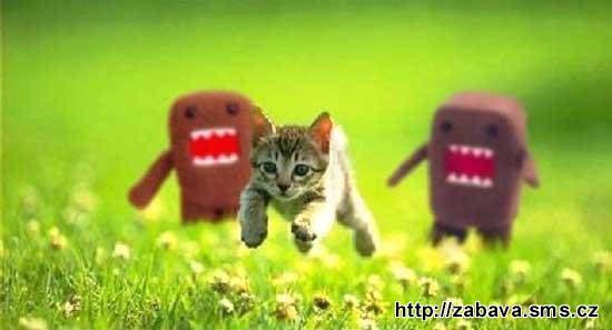 http://humor.sms.cz/kategorie/humor/obrazky/obrazky/kav5.jpg