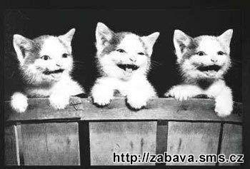 http://humor.sms.cz/kategorie/humor/obrazky/obrazky/kav69.jpg