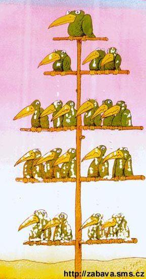 http://humor.sms.cz/kategorie/humor/obrazky/obrazky/organschema711.jpg