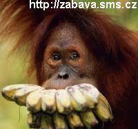 http://humor.sms.cz/kategorie/humor/obrazky/obrazky/ze351.jpg