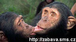 http://humor.sms.cz/kategorie/humor/obrazky/obrazky/ze373.jpg
